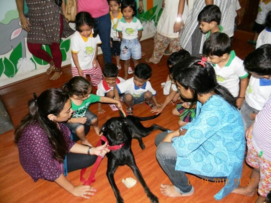 Animal Assisted Therapy with children