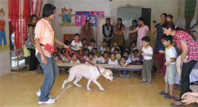 Therapy dog Angel works in schools and kindergartens to help in introducing animals to children