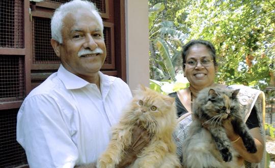 Buy persian cat bangalore